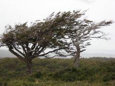 El viento patagónico