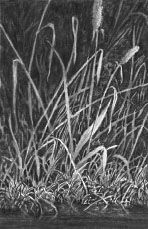 Charcoal Drawing Techniques How to draw grass, negative drawing lesson by Mike Sibley Realistic Pencil Drawings, Pencil Drawing Tutorials, Love Drawings, Art Tutorials, Charcoal Drawings, Drawing Lessons, Drawing Techniques, Drawing Tips, Drawing Skills