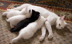 Die 18 stolzesten Katzenmütter der Welt. Nr. 3 bringt Dich zum kreischen. | LikeMag | We Like You