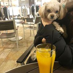 ママ達とカフェ🍩☕∗*゚  #🐶#チワプー  #チワワ  #トイプードル#chihuahua#小型犬#mix犬#dog#dogs#cute#love#lovely#family#animals#animal #insta#instabeauty#instagood#instalike#instalove#instalovers#instalook#instamood#pic#photo#pretty#instadog#愛犬#愛犬家#レオン