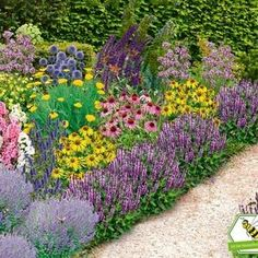 "Design tips for an ever-flowering bed - Bee-friendly garden bed ""Nectar Oasis"" colorful, 22 plants - Succulents Garden, Garden Pots, Hydrangea Care, Garden Stepping Stones, Planting Plan, Growing Plants, Backyard Landscaping, Shrubs, Lawn"