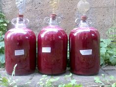 How to make Blackberry Wine (2014)