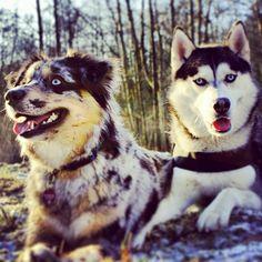 two pretty animals