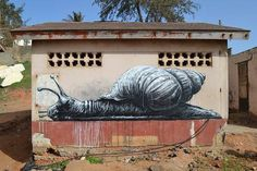 roa snail gambia africa
