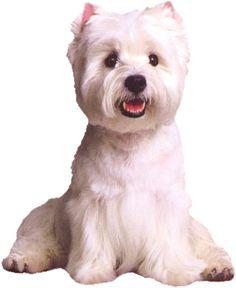 kutya.png