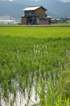 Hida Satoyama Cycling, Hida-Furukawa, Gifu Prefecture.