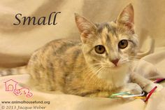 Small has been adopted!!!! Newborn Small was found with her family in the hvac area outside a rec center. Mom and siblings did not make it, and Small found refuge at Animal House. Small was as tiny as a baby bird, but her strong personality was evident from the start. She is a playful, joyous ray of sunshine and I envy her lucky family!  Small is as sweet as can be and we are SOOOOO happy she has the run of a home and a family to love.