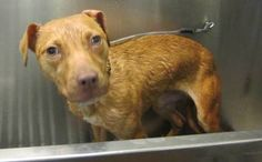 Cops Search Home for Drugs, Uncover 18 Brutalized Pit Bulls        Another story about how forgiving these creatures are....
