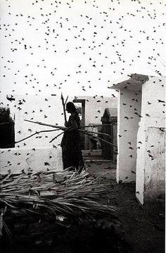Cementario, Juchitan, Oaxaca,  Graciela Iturbide 1988
