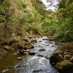 Great Bush Walks to Do - Viva