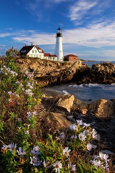 Flowering Asters bloom on the rocks below the Portland Head Lighthouse near Portland Maine. © Brian Jannsen Photography