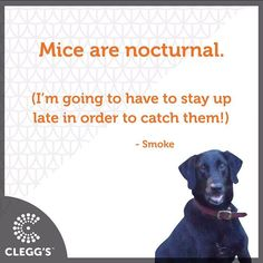 #pestcontrolservice #pestcontrol #pest #bugs #insects #bedbugs #bedbugdog #dogs #dogslife #dogstagram #dogsofinstagram #dogsrule #follow #instagood #instafollow #awesome #northcarolina #northcarolinaliving #carolinas #dogmom #doglover #labrador #labsofinstagram #carolinamom #love #happy #smile #fun