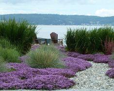 plantes tapissantes et graminées ornementales dans le jardin