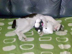 Cat likes stuffed....hello kitty, kitty...