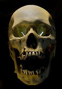 UB_Skull_27.jpg