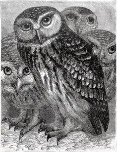 OwlsPrintable-GraphicsFairy.pdf