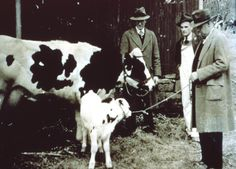 The first calf born via artificial insemination in the U.S. in February, 1939 was at the Schomp Farm in Stanton, NJ. At the time it was considered the most photographed and publicized bovine in history. Courtesy of Rutgers Department of Animal Sciences