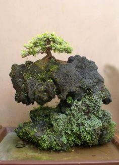 mini sobre roca