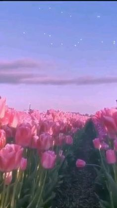 Aesthetic Indie, Aesthetic Movies, Flower Aesthetic, Aesthetic Images, Aesthetic Videos, Aesthetic Pastel Wallpaper, Aesthetic Backgrounds, Aesthetic Wallpapers, Beautiful Landscape Wallpaper