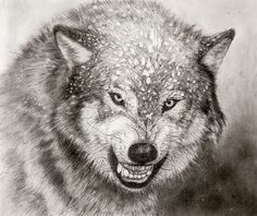Eighth grader Kelly Wang of Johns Creek, Georgia won an honorable mention for The Snowy Wolf in the 2012 NRA Youth Wildlife Art Contest