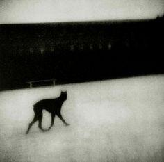 Black Dog goes it's own way