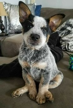 Cute Baby Animals, Animals And Pets, Funny Animals, Wild Animals, Cute Puppies, Cute Dogs, Dogs And Puppies, Doggies, Puppies Tips
