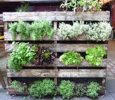 縦の空間をうまく取り入れてみました。これなら省スペースでたくさんの野菜やハーブを栽培できますね!まさに機能的な菜園♪