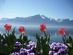 tulips in Montreux, Switzerland