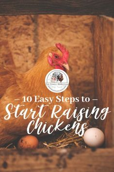 Start raising chickens in 10 easy steps! Whether you're chicken keeping for fun or sufficiency, raising chickens is easy! Raising Quail, Raising Ducks, Raising Chickens, Chicken Garden, Chicken Feed, Chicken Runs, Urban Chickens, Meat Chickens, Chickens Backyard