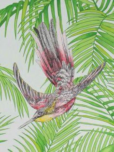 Bird tropical wallpaper
