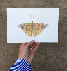 Painted lady butterfly original watercolour painting inspired by visitors to my garden | Artist Kathleen Maunder