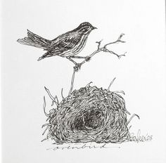 Bird and nest drawing original black ink by ArtyDidact on Etsy, $45.00