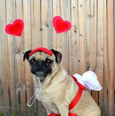 Valentine's Day Love package - CUPID WINGS and HEART hat fits all size dogs or cats - I really love this. It feels a little wrong to love it as much as I do...but there you have it.