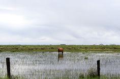 flooded    #horses #america #photography