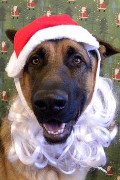 Santa Doggy -- German Shepherd