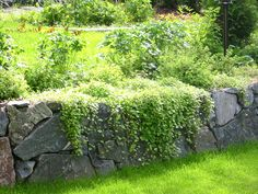 Kivimuuri Garden Inspiration, Garden Ideas, The Rock, Container Gardening, Stepping Stones, Vineyard, Balcony, Outdoor Decor, Flowers