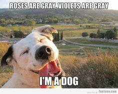 Roses are Grey Violets are Grey