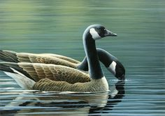 Canada Geese Canvas Print / Canvas Art by Mark Mittlesteadt