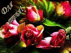 Красивые розы Для тебя! - Цветы