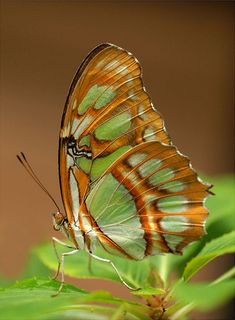 Beauty butterfly – natural patterns