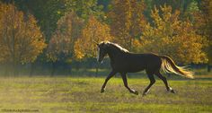 Thanksgiving is the perfect time to reflect on all the wonderful things about sharing a life with horses.