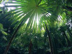 jungle-sorbet:   followjungle-sorbetfor more tropics