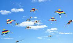Baird Kite 3.jpg (750×442)