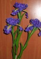 iris gumpaste flower tutorial