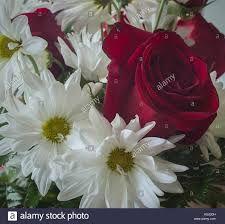 Margeritenstrauß zu einfügen – Google-Suche Rose, Google, Flowers, Plants, Searching, Pink, Florals, Roses, Planters