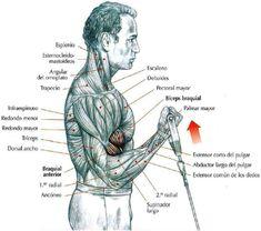 Biceps Workout...