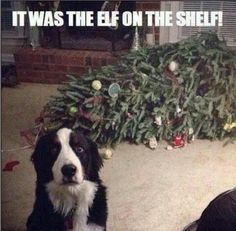 Elf on the shelf...funny