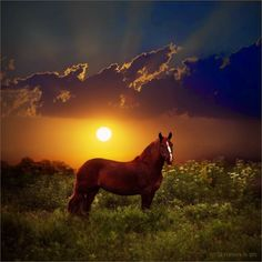 Heel fraai paard.