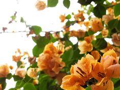 5/27(金)バリ島ウブドのお天気は晴れ。室内温度27.7℃、湿度80%。昨晩は雨が降って気温が下がり、湿度がグンと上昇しました。花々が雨を浴び、元気良く咲いています。