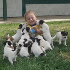 ~Happiness is Jack Russell Terriers!~